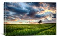 Sunset Field, Canvas Print