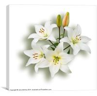 Spray of White Lilies, Canvas Print