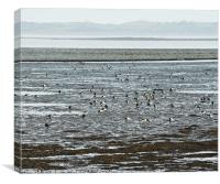 Winter Brent Geese, Strangford Lough, Canvas Print