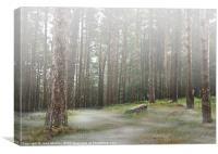 Mysterious Foggy Woodland Scene, Canvas Print