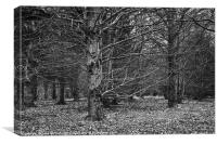 Beech Wood in Winter, Canvas Print
