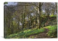 Bluebell Woods, Newtownards, County Down, Canvas Print