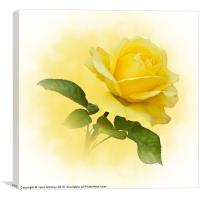 Golden Yellow Rose, Canvas Print