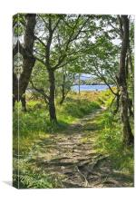 Woodland Path - Killarney