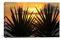 Holiday sunset, Canvas Print