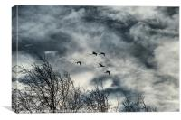 Fly over, Canvas Print