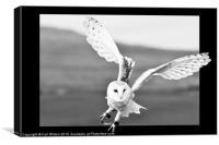 Flying Barn Owl, Canvas Print