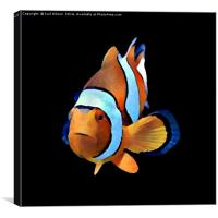 Art Clown Fish, Canvas Print