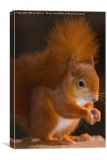 Super Cutie Red Squirrel , Canvas Print