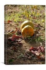 Pumpkin season, Canvas Print