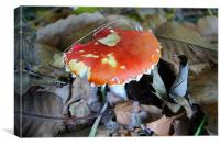 Mushroom in Autumn, Canvas Print