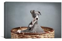 Whippet Puppy Portrait, Canvas Print