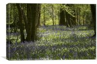 Bluebell walk Sussex, Canvas Print