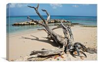 Drift wood Barbados, Canvas Print