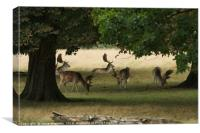 Grazing Deer, Canvas Print
