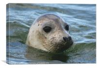 Norfolk Seal, Canvas Print