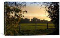 Mellow Autumn Sun, Canvas Print