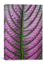 purple pattern, Canvas Print