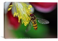 Hoverfly meal, Canvas Print