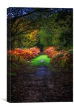 Autumn Path, Canvas Print