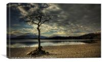 Lone tree Loch Lomond, Canvas Print