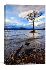 Loch Lomond Tree, Canvas Print