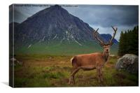 Monarch of the Glen at the Buachaille , Canvas Print