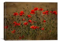the irresistible attraction of poppies, Canvas Print