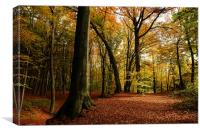 autumn forest, Canvas Print