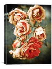 roses were red, Canvas Print