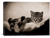cattitude, Canvas Print