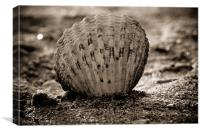 shell, Canvas Print