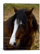 brown pony, Canvas Print