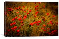 poppy fields forever, Canvas Print