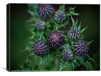 thistle buds, Canvas Print