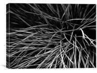 grass leaves, Canvas Print