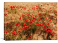 red poppy field, Canvas Print