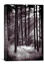dark forest, Canvas Print