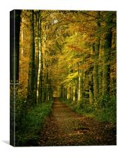 autumn forest path, Canvas Print