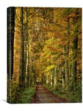 autumn forest lane, Canvas Print