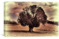 one tree hill, Canvas Print