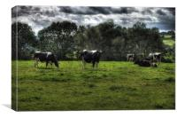 cows, Canvas Print
