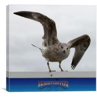 Brighton Herring gull, Canvas Print