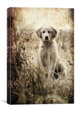 grunge puppy on a chain, Canvas Print