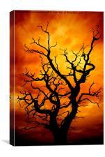 lightning tree, Canvas Print