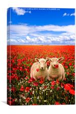 twins in the poppies, Canvas Print