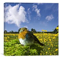 european robin, Canvas Print