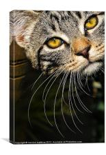 whisker WOW, Canvas Print