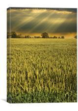drama in the barley field, Canvas Print