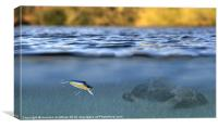 fishing lure in use, Canvas Print